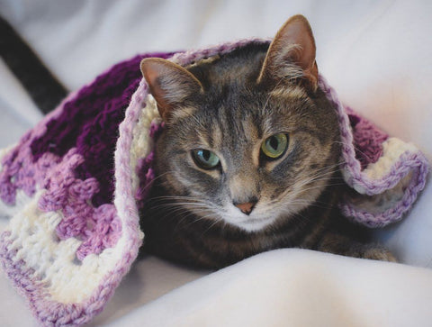 Gray tabby cat Olivia with a purple and white crochet Cat Mat blanket
