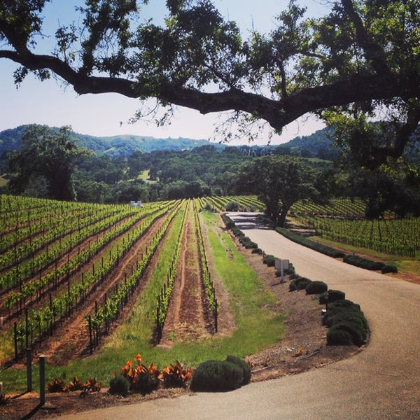 We're Trippin:  Sonoma County Wine Country