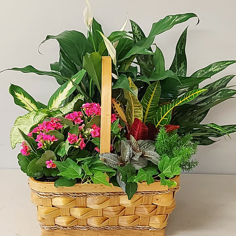 Basket Tropical Garden 14""