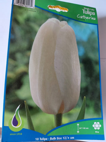 Bulbs Tulip Catherina 10/pkg