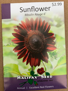 Halifax Seed Sunflower Moulin Rouge