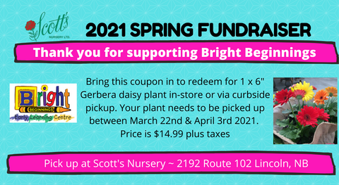 Bright Beginnings Fundraiser Coupon - Gerbera Daisy