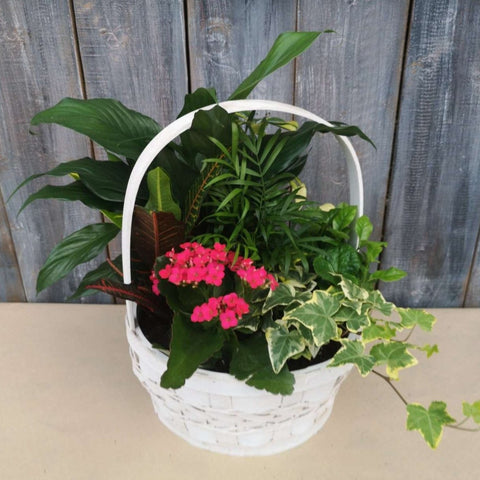 Basket Tropical Garden 10""