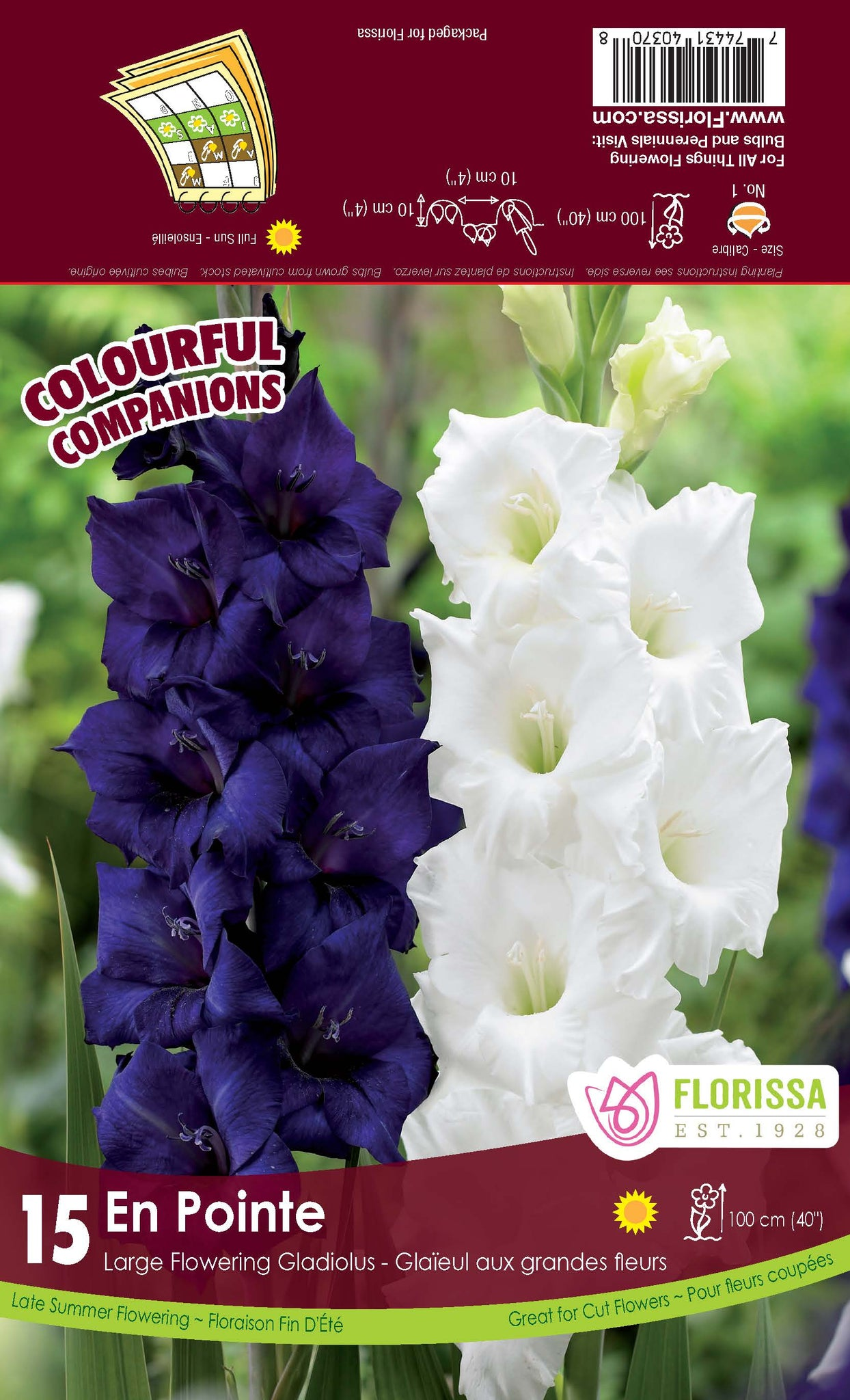 Bulbs CC Glads En Pointe 15/pkg