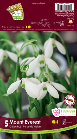 Bulbs Galanthus Snowdrops Mount Everest 5/pkg