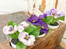 Load image into Gallery viewer, Set of 3 Violets