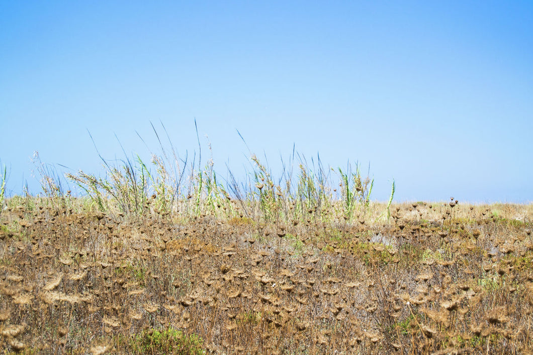 Gold grass landscape in Italy summer photo print