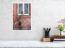 Load image into Gallery viewer, Rose on the wall print size 30.7 cm x 45.0 cm, 12.1 inches x 17.7 inches