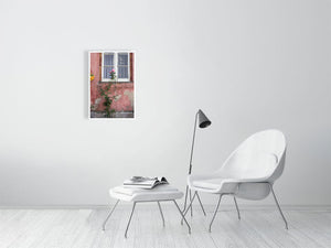 Rose on the wall print size 40.7 cm x 60.0 cm, 16.0 inches x 23.6 inches