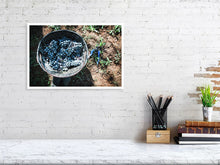 Load image into Gallery viewer, 30.7 cm x 45.0 cm, 12.1 inches x 17.7 inches wine grapes harvest print