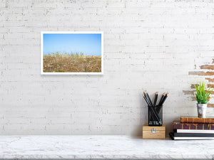 20.7 cm x 30.0 cm, 8.1 inches x 11.8 inches gold grass landscape photo print