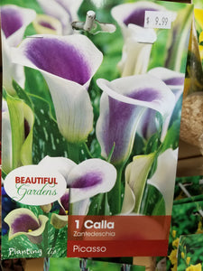 Calla Lily Bulbs