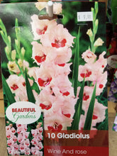Load image into Gallery viewer, Gladiolus Bulbs