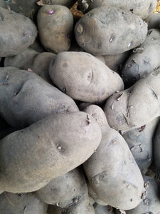 All Blue Seed Potato