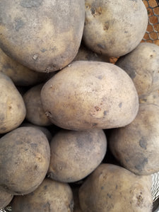 Dakota Pearl Seed Potato