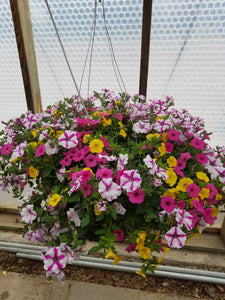 "Sunglasses 14"" Hanging Basket"