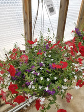 "Load image into Gallery viewer, Patriot 14"" Hanging Basket"