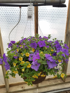 "Blue Bayou 14"" Hanging Basket"