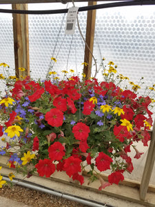 "Fire & Ice 14"" Hanging Basket"