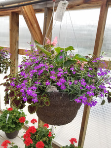 "Magic Dragon 14"" Hanging Basket"