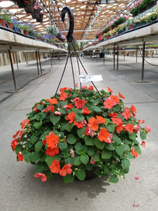 "Salmon Shades Impatiens 12"" Hanging Basket"