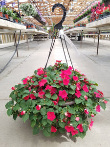 "Rose Impatiens 12"" Hanging Basket"