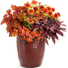 Load image into Gallery viewer, Coleus - ColorBlaze Wicked Hot