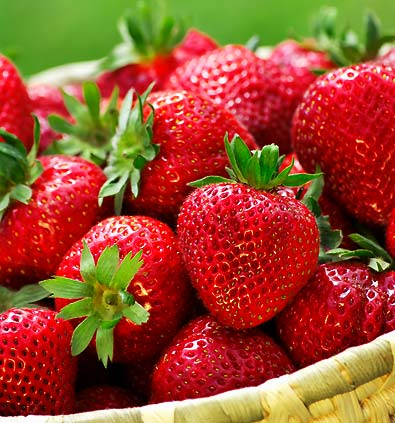 Strawberry - Quinault