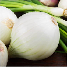 Load image into Gallery viewer, Onion - White Sweet Spanish