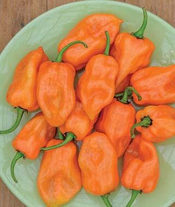 Pepper - Habanero