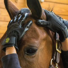 Horse head and handson gloves
