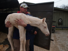 Man with rescued horse - Save the Horses