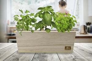 Culinary Garden Trio Kit