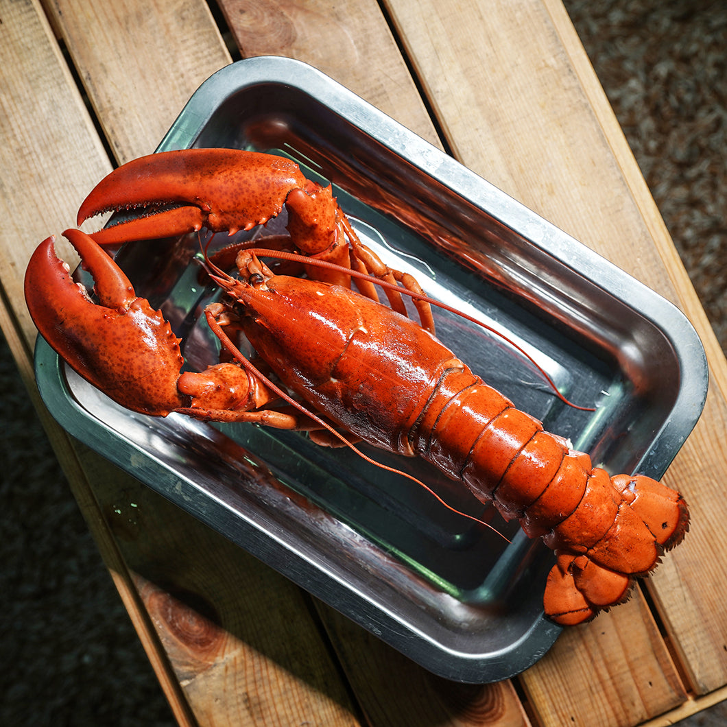 Boston Lobster (Cooked Frozen) 350g