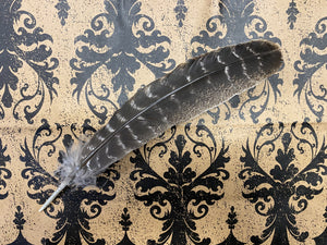 Turkey Feather for Smudging