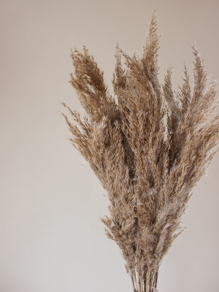 Pampas Pluimen - Droogbloemen Boeket Pampasgras Gedroogd Naturel - Flowers to stay - FTS Atelier