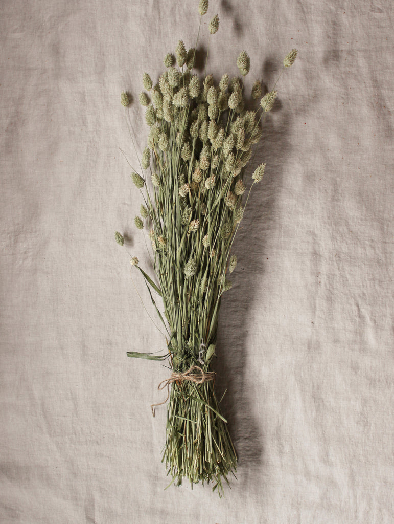 Gedroogde bos Phalaris - naturel - droogbloemen online - fts atelier - flowers to stay