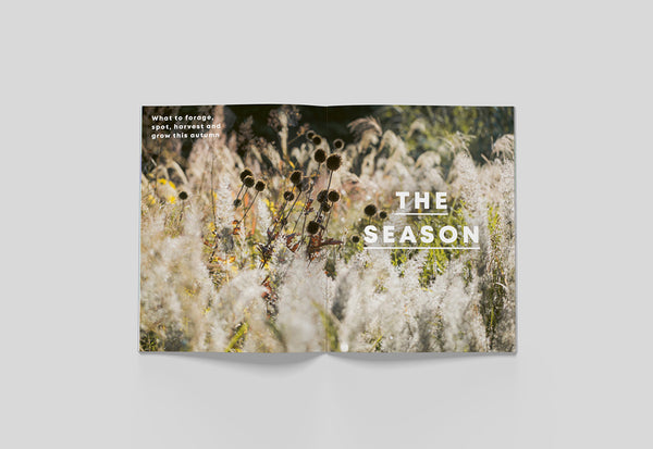 Bloom Magazine – Issue 04: Autumn – Inside 01