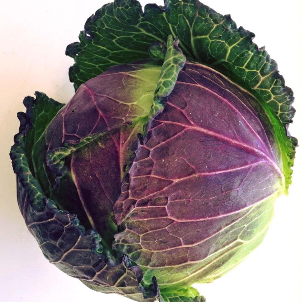 January King Cabbage - each