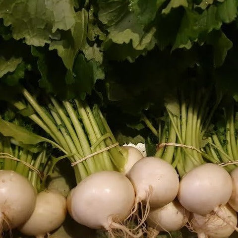 Japanese white turnips  – bunch