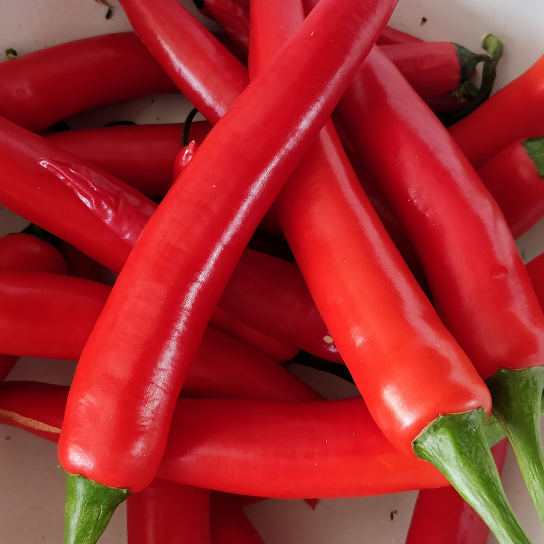 Red chilli – 100g