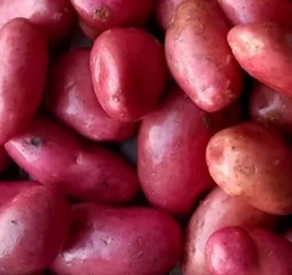 Red Manitou potatoes – 2kg