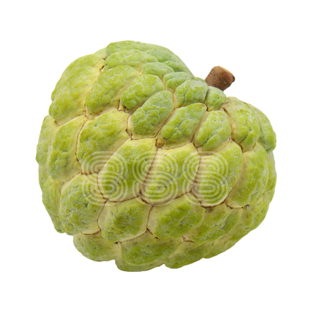 Brazil Sugar Apple (Jumbo/ Large)