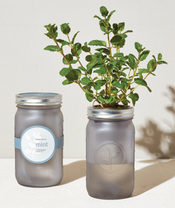 The Mint Garden Jar in Grey