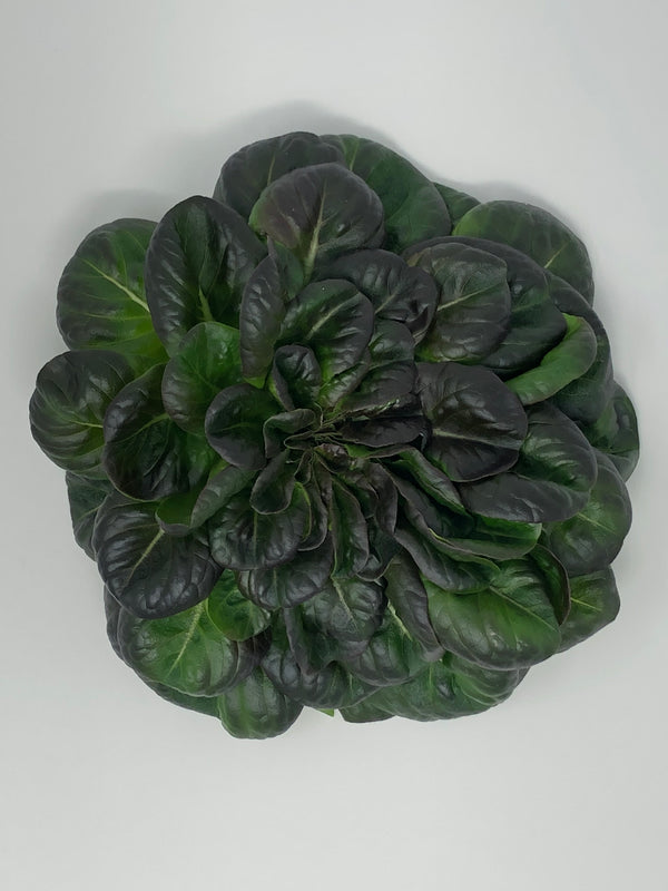 Red Butter Lettuce