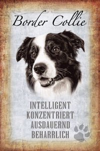 Border Collie - intelligent konzentriert