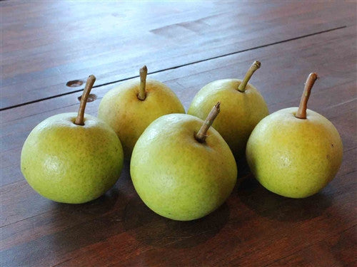 Our HARDIEST European Pear - SO SWEET