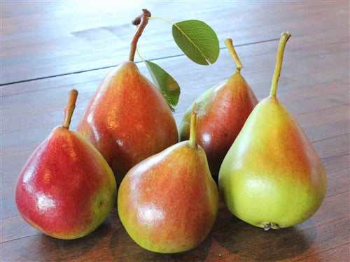 European Pear - NORTHBRITE