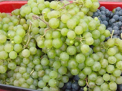 A Seedless Grape - Polar Green
