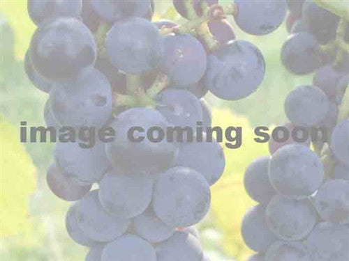 Sovereign Coronation Seedless Grape